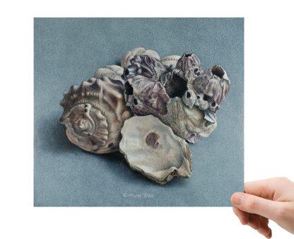 Schelpen en zeepokken